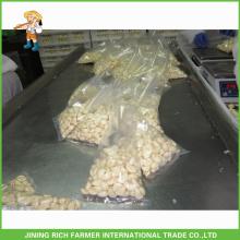 1Kg Vacuum Bag chinês fresco pelado alho