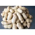 chinese peanut