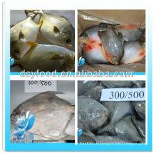 Gefrorene goldene Pomfret Pompano / rote Pomfret Pompano Fisch