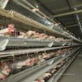 Fabricante de porcelana galvanizado a quente tipo H camada de design gaiolas de frango gaiola de frango