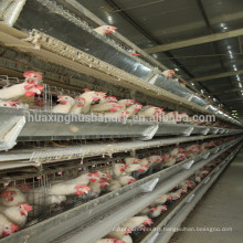 best price hot galvanized H type cages for chickens chicken cage