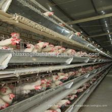 Melhor preço galvanizado a quente H gaiolas de tipo para gaiolas galinha gaiola