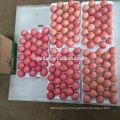 Vender Yantai fresco vermelho Fuji Apple