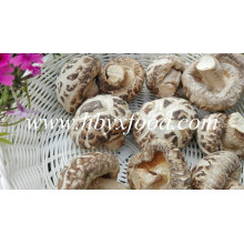 Dried Flower Mushroom, Dried Vegetable, China Shiitake Mushroom