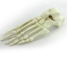 Compre um pé de 12323, osso de pé perfurado sintético
