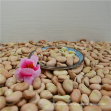 size 60-70grains/100g broad bean