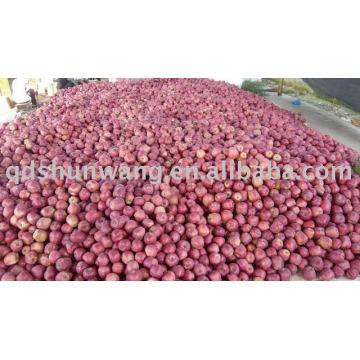 Manzana roja fresca de primera clase del niu del hua