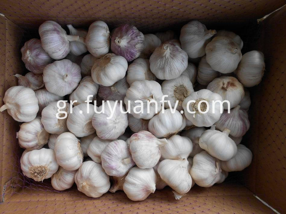 Normal White Garlic 33