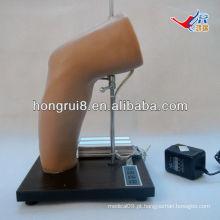 Modelo de treinamento de injeção intra-articular do cotovelo Deluxe ISO, treinamento de injeção de junção do cotovelo