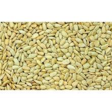 Graines de semences de tournesol