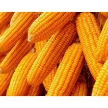 (Corn Peptide) -Top Quality Food Grade Corn Peptide