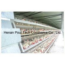 Poultry Farm Layer Cage System