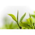 Keemun Black Tea with factory price per kg