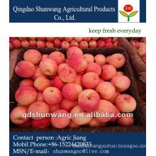 Yantai Red Fuji Apple