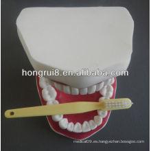 Nuevo modelo de cuidado médico dental estilo, los dientes salud agrandaron el modelo