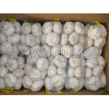 Fresh White Garlic with 500gr Small Bag
