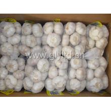 Alho branco fresco com 500gr saco pequeno