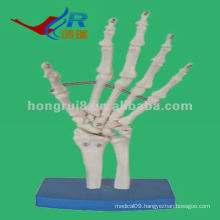 HR-114 VIvid Life-size Skeleton Hand Model,Anatomical Skeleton Hand