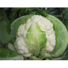 Горячая продажа цветная капуста семена овощ с большим ценой