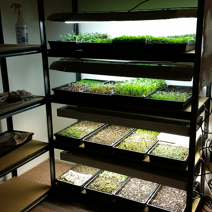 Sistem Hydroponic Growing MicroGreen dalam