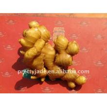 fresh yellow ginger
