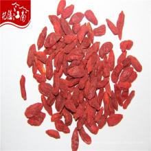 Red ningxia goji bayas de goji bayas al por mayor a granel