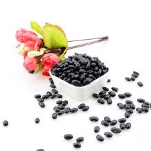 Granos de riñón negros secos naturales frijol de matpe negro de la alubia negra