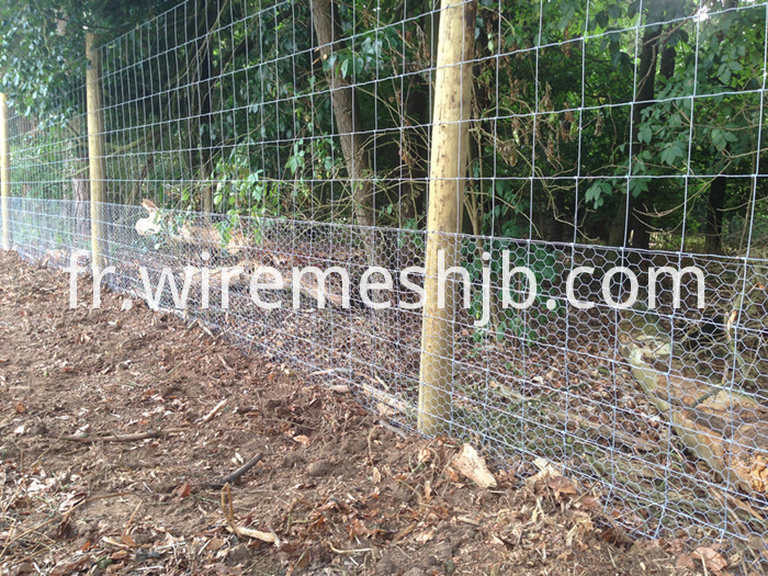 Hinge Joint Field Fence