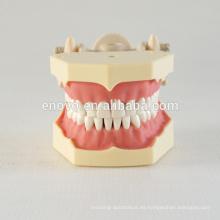 32 piezas dientes extraíbles goma suave enseñanza modelo dental 13008, dientes de reemplazo Siut para mandíbula Frasaco