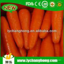 China New Crop Carrot Lieferant