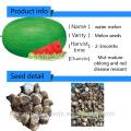 Suntoday resiant para aquecer a relíquia verde frio melhorar a fruta para plantar sementes imagem híbrido vegetal F1 sementes de melão de água sudão