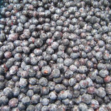 IQF congelación orgánica Blueberry Zl-100065