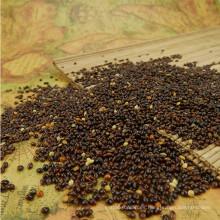 Mijo de Broomcorn negro chino con alta calidad