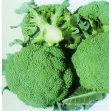 Brócoli 2013