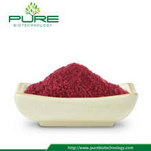 Extracto natural de cranberry / 1% -36% de antocianidinas