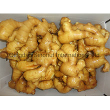 Gingembre sec, gingembre mi-sec, gingembre frais en Chine