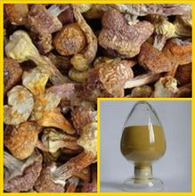 Hot Sale Agaricus Blazei Murill Extract Powder/Best Price Agaricus Blazei Murill