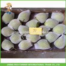 Natürliche frische Shandong Birne