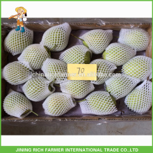 Natural Fresh Shandong Pear