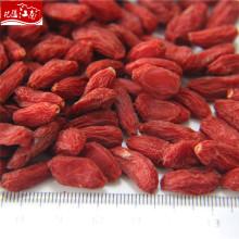 Top-Qualität Großhandel chinesischen Wolf Beeren