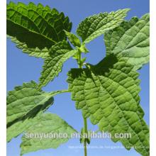 Hersteller Großhandel CAS NO: 28957-04-2 Pure Natural Oridonin 98%
