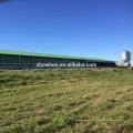Structure en acier, volaille, poule, ferme, métal, hangar, vente, ponte, poules