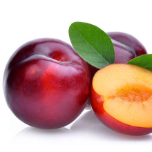 high quality fresh plum fruit