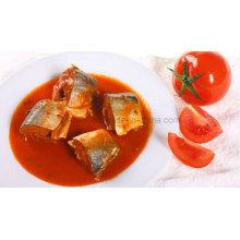 Konservierte Makrele in Tomatensauce