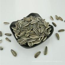 Fournir toutes sortes de graines de tournesol hybrides 5009/3638/3939/1121/363