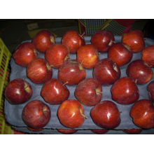 Prix de gros pommes fruit crème pâtissière