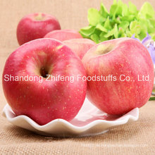 Frische Früchte FUJI Apfel