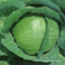 IQF Chinese fresh purple cabbage