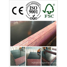 Coc Film Faced Plywood 18*1220*2440mm