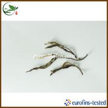 Xin Banzhang Antigo Chá Árvore Chá Puer
